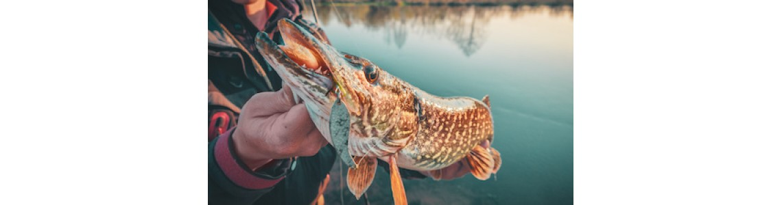 Pike Fishing Tips For Early Spring Part 2